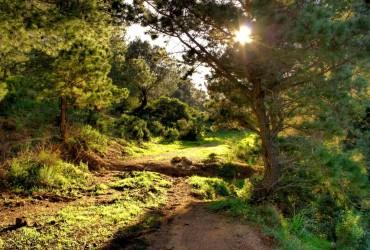 sentiero - zona Nuraghe S'acqua Secci